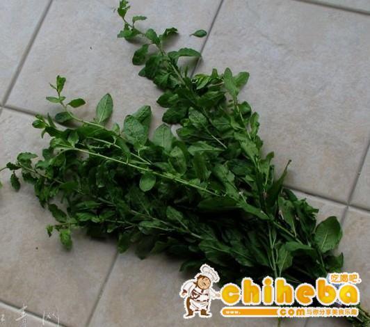 枸杞菜为茄科,枸杞属落叶灌木植物宁夏枸杞的菜叶。多分枝,通常有棘刺。叶互生或 2-4 枚簇生,卵形、卵状菱形、长椭圆形或卵状披针形。花冠淡紫色,裂片边缘密被缘毛,雄蕊稍短於花冠。果实成熟为红色,即红枸杞。根乃退虚热的中药地骨皮。以产於中国宁夏、甘肃、河北、青海等地的质量最好。